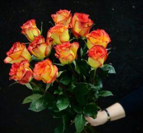 Роза по акции