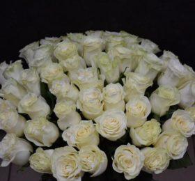 51 роза на ленте