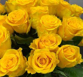 Желтые розы 15 шт на ленте