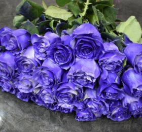 31 синяя роза на ленте