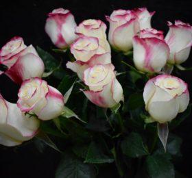Букет 11 роз на ленте