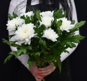 7 хризантем на ленте